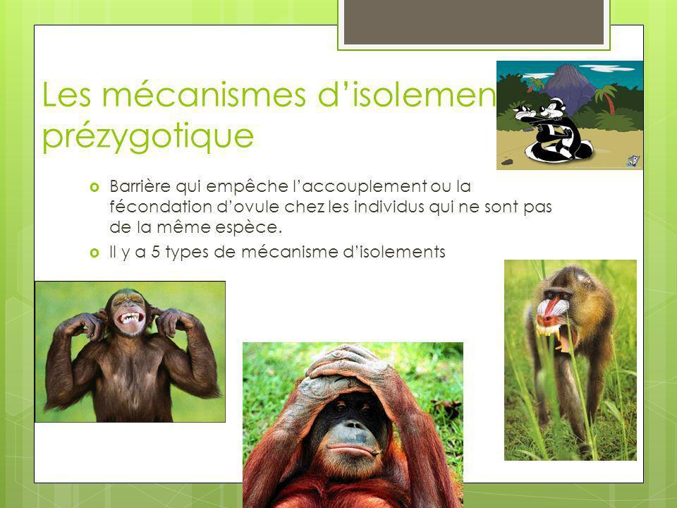 Les mécanismes isolement éthologiques Certains animaux on un rituel (danse, chant ) certain on des signaux chimiques qui son propre à lespèce comme tell.