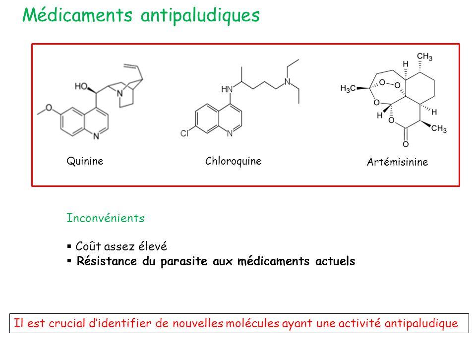 Médicaments antipaludiques Il est crucial didentifier de nouvelles molécules ayant une activité antipaludique Inconvénients Coût assez élevé Résistance du parasite aux médicaments actuels QuinineChloroquine Artémisinine
