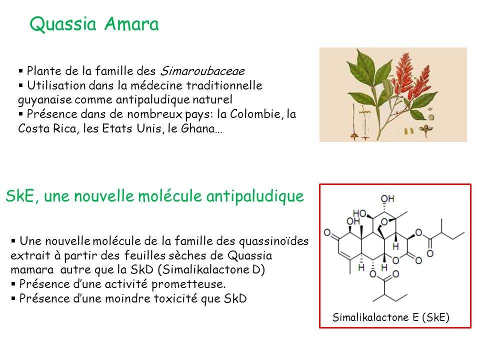 Quassia Amara Plante de la famille des Simaroubaceae Utilisation dans la médecine traditionnelle guyanaise comme antipaludique naturel Présence dans de nombreux pays: la Colombie, la Costa Rica, les Etats Unis, le Ghana… SkE, une nouvelle molécule antipaludique Une nouvelle molécule de la famille des quassinoïdes extrait à partir des feuilles sèches de Quassia mamara autre que la SkD (Simalikalactone D) Présence dune activité prometteuse.