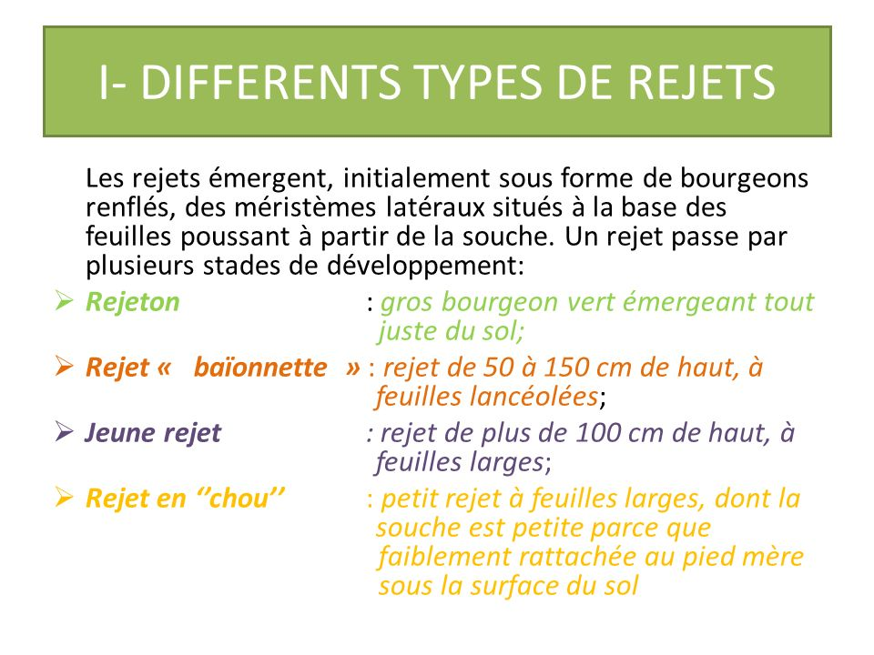 QUELQUES RAPPELS SUR LE REJET DE BANANIER ET SON ORGANISATION I- DIFFERENTS TYPES DE REJETS II- ORGANISATION DUN REJET I- DIFFERENTS TYPES DE REJETS II- ORGANISATION DUN REJET