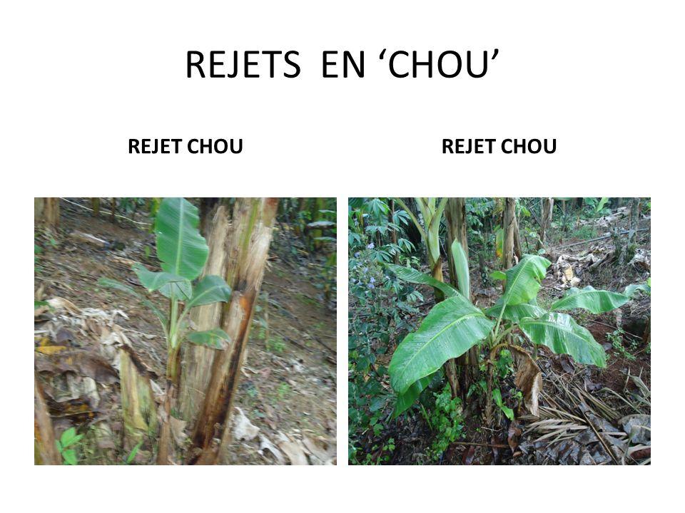 REJETS BAÏONNETES REJETS BAÏONNETTES