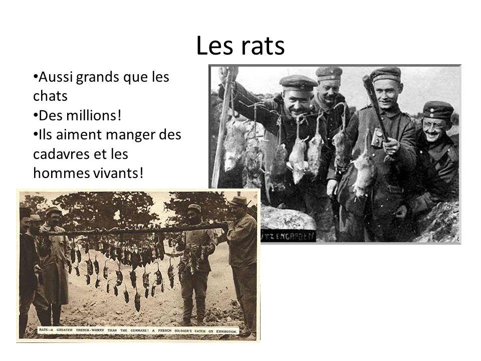 Les rats Aussi grands que les chats Des millions! Ils aiment manger des cadavres et les hommes vivants!