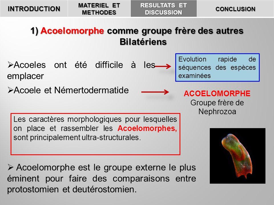 INTRODUCTION MATERIEL ET METHODES RESULTATS ET DISCUSSION CONCLUSION Acoelomorphe est le groupe externe le plus éminent pour faire des comparaisons en