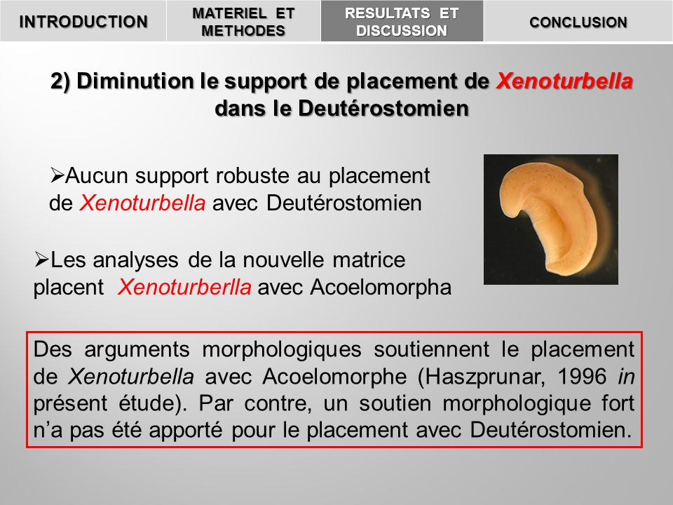 INTRODUCTION MATERIEL ET METHODES RESULTATS ET DISCUSSION CONCLUSION 2) Diminution le support de placement de Xenoturbella dans le Deutérostomien Aucu
