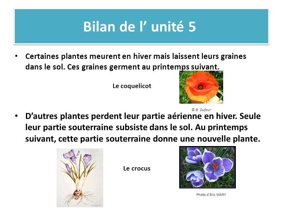 Bilan de l unité 5 Certaines plantes meurent en hiver mais laissent leurs graines dans le sol.