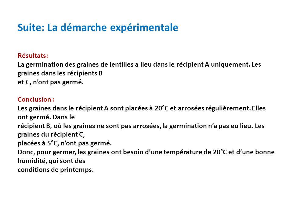 Suite: La démarche expérimentale Résultats: La germination des graines de lentilles a lieu dans le récipient A uniquement.