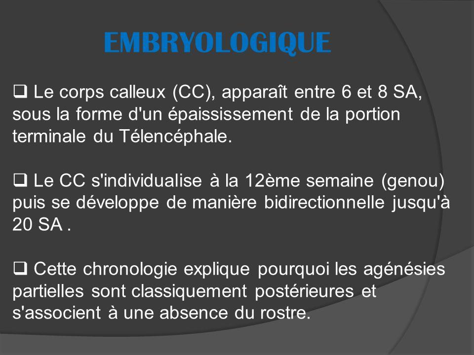 Le corps calleux (CC), apparaît entre 6 et 8 SA, sous la forme d un épaississement de la portion terminale du Télencéphale.