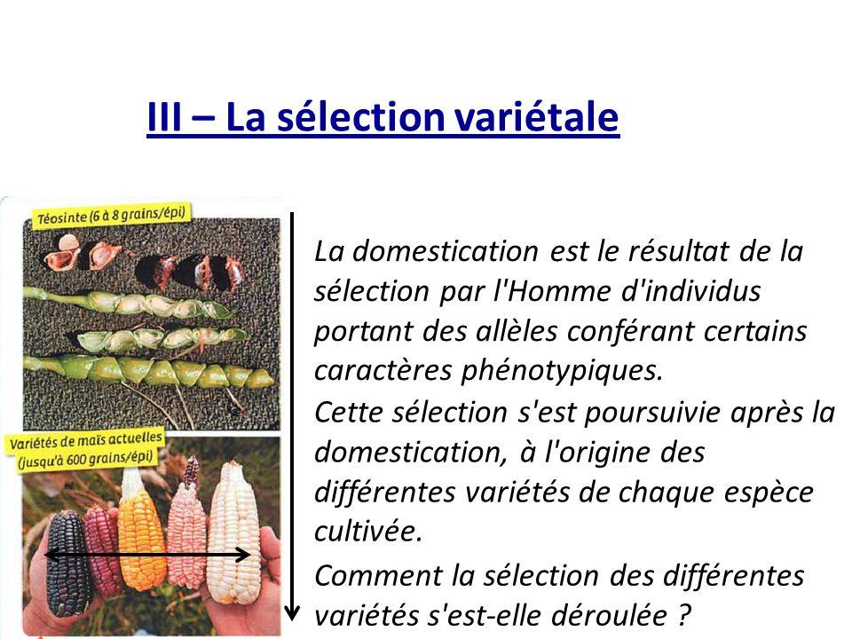 III – La sélection variétale La domestication est le résultat de la sélection par l Homme d individus portant des allèles conférant certains caractères phénotypiques.