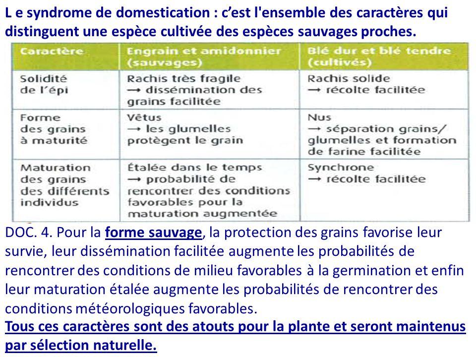 L e syndrome de domestication : cest l ensemble des caractères qui distinguent une espèce cultivée des espèces sauvages proches.