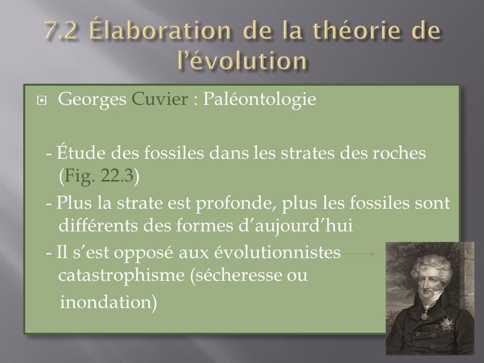 Georges Cuvier : Paléontologie - Étude des fossiles dans les strates des roches (Fig. 22.3) - Plus la strate est profonde, plus les fossiles sont diff