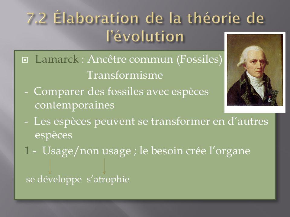 Lamarck : Ancêtre commun (Fossiles) Transformisme - Comparer des fossiles avec espèces contemporaines - Les espèces peuvent se transformer en dautres