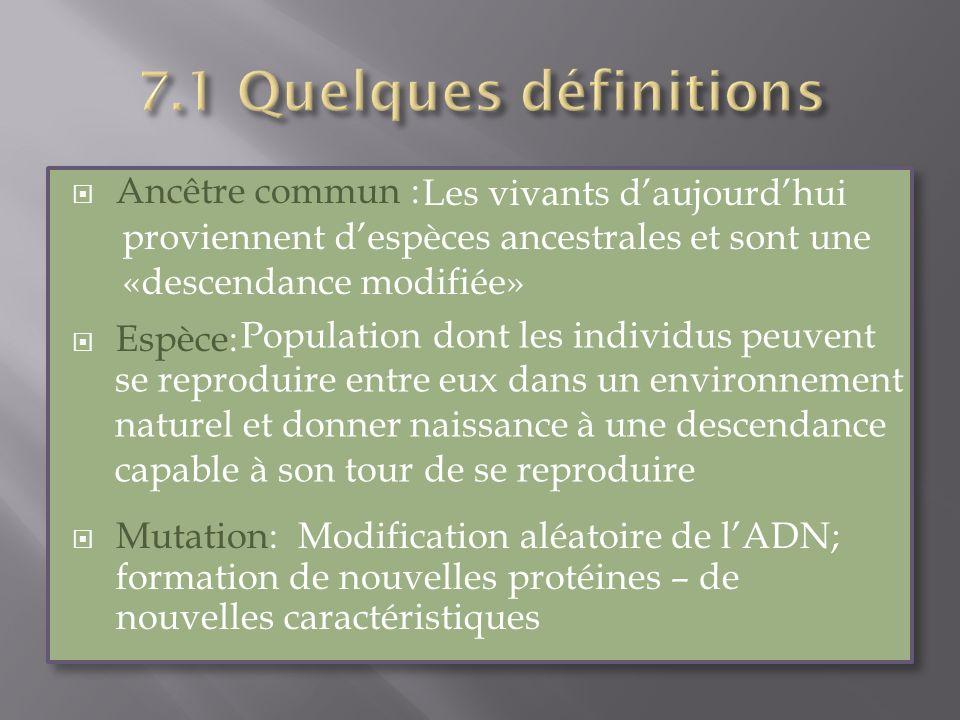 Ancêtre commun : Espèce: Mutation: Modification aléatoire de lADN; formation de nouvelles protéines – de nouvelles caractéristiques Ancêtre commun : E