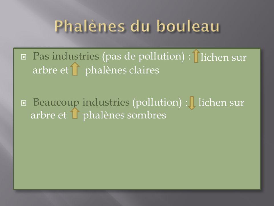 Pas industries (pas de pollution) : Beaucoup industries (pollution) Pas industries (pas de pollution) : Beaucoup industries (pollution) lichen sur arb