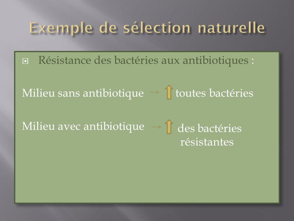 Résistance des bactéries aux antibiotiques : Milieu sans antibiotique toutes bactéries Milieu avec antibiotique Résistance des bactéries aux antibioti