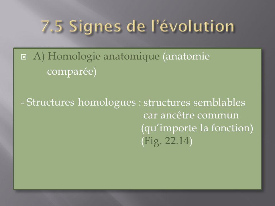 A) Homologie anatomique (anatomie comparée) - Structures homologues : A) Homologie anatomique (anatomie comparée) - Structures homologues : structures