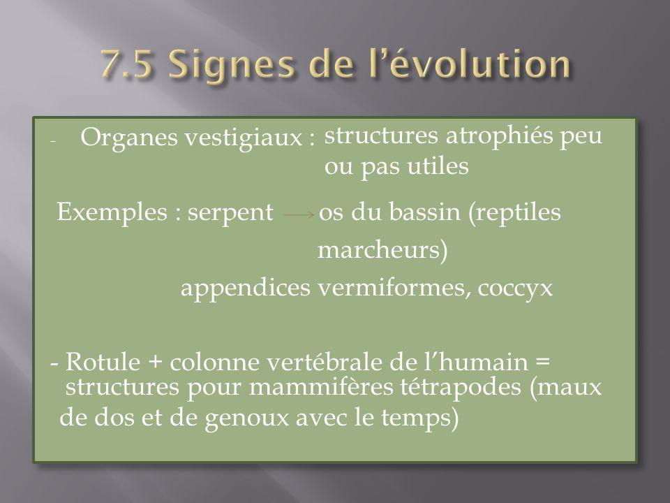 - Organes vestigiaux : Exemples : serpent os du bassin (reptiles marcheurs) appendices vermiformes, coccyx - Rotule + colonne vertébrale de lhumain =