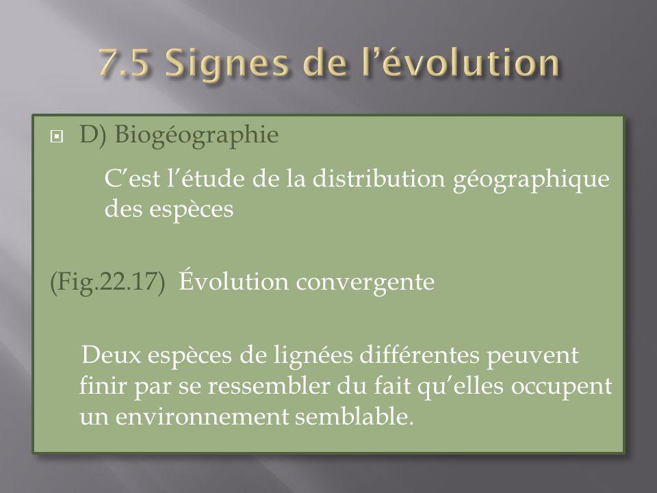 D) Biogéographie (Fig.22.17) Évolution convergente Deux espèces de lignées différentes peuvent finir par se ressembler du fait quelles occupent un env