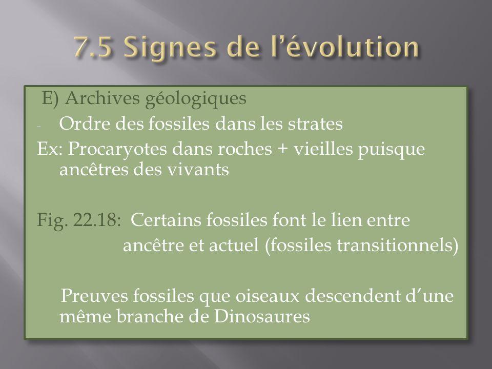 E) Archives géologiques - Ordre des fossiles dans les strates Ex: Procaryotes dans roches + vieilles puisque ancêtres des vivants Fig. 22.18: Certains