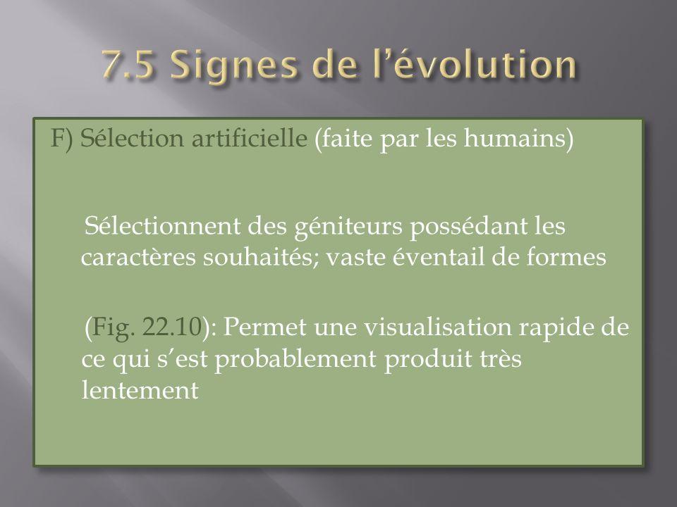 F) Sélection artificielle (faite par les humains) (Fig. 22.10): Permet une visualisation rapide de ce qui sest probablement produit très lentement F)