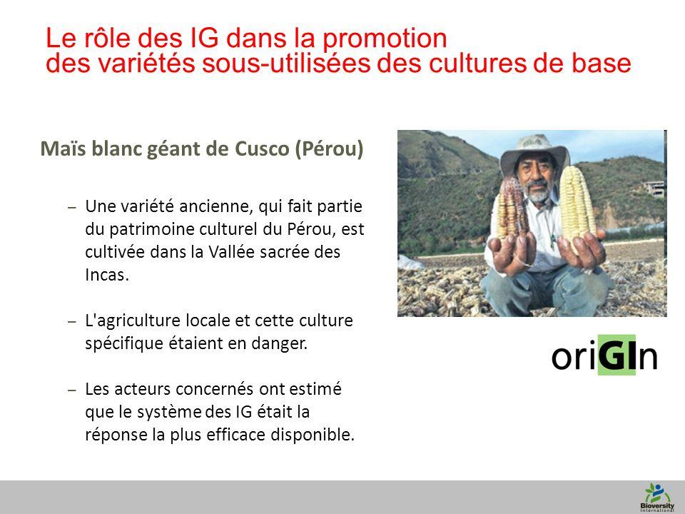 11 Le rôle des IG dans la promotion des variétés sous-utilisées des cultures de base Maïs blanc géant de Cusco (Pérou) – Une variété ancienne, qui fai