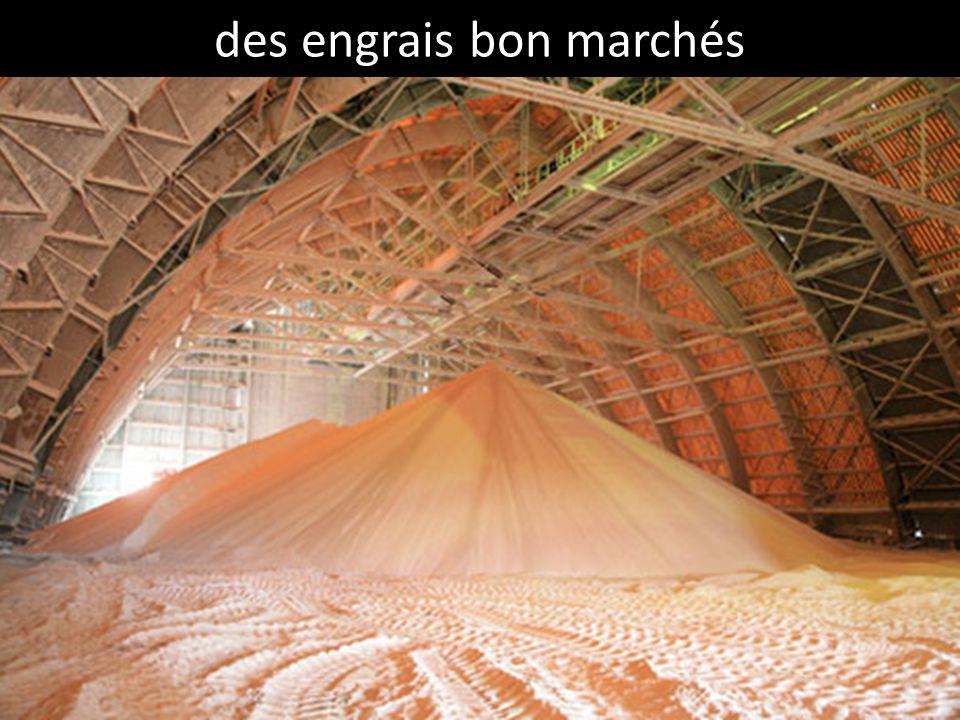 des engrais bon marchés