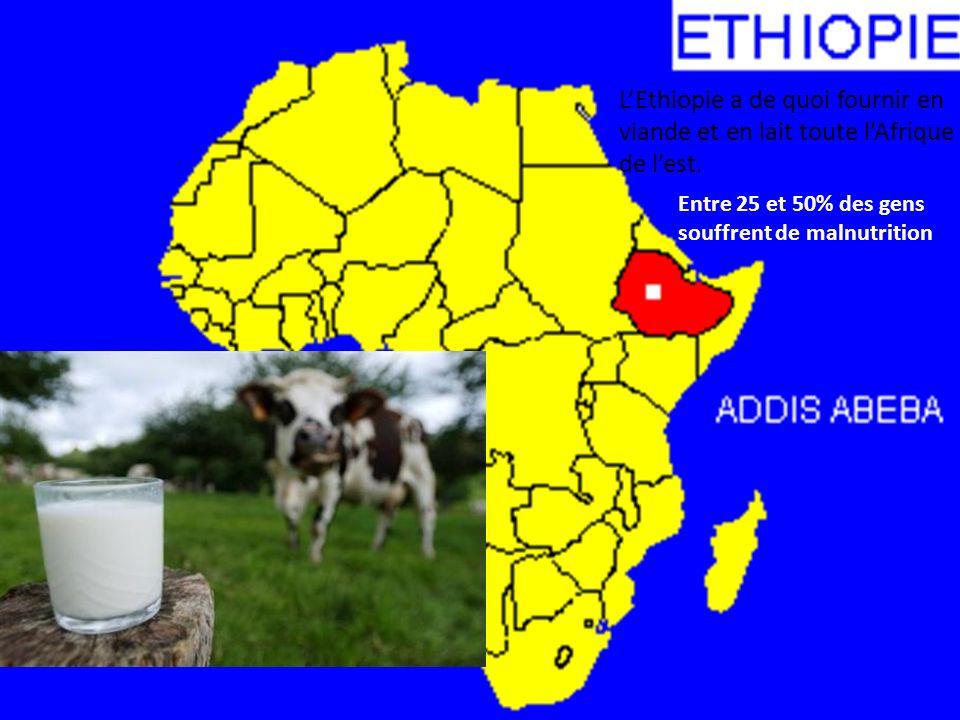 LEthiopie a de quoi fournir en viande et en lait toute lAfrique de lest. Entre 25 et 50% des gens souffrent de malnutrition