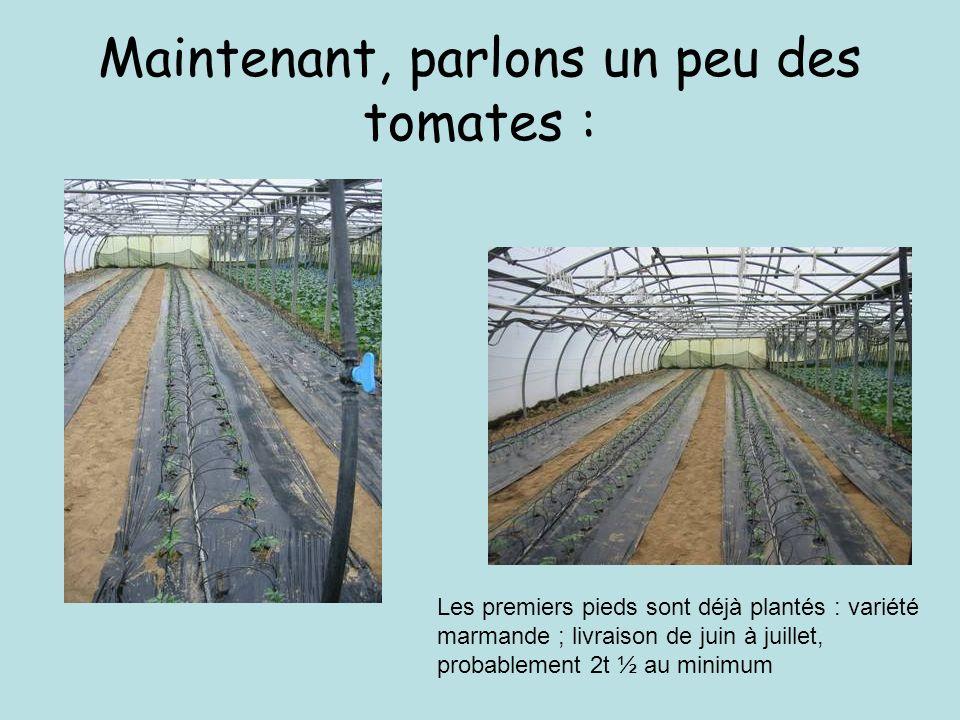 Maintenant, parlons un peu des tomates : Les premiers pieds sont déjà plantés : variété marmande ; livraison de juin à juillet, probablement 2t ½ au minimum