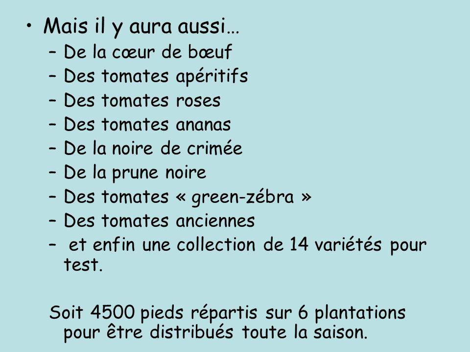 Mais il y aura aussi… –De la cœur de bœuf –Des tomates apéritifs –Des tomates roses –Des tomates ananas –De la noire de crimée –De la prune noire –Des tomates « green-zébra » –Des tomates anciennes – et enfin une collection de 14 variétés pour test.