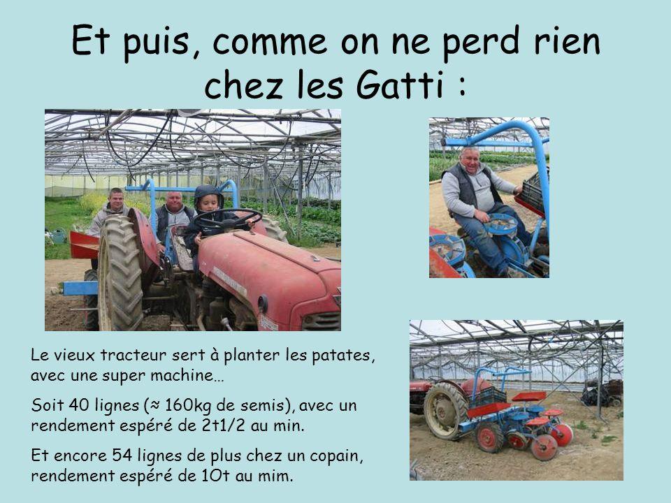 Et puis, comme on ne perd rien chez les Gatti : Le vieux tracteur sert à planter les patates, avec une super machine… Soit 40 lignes ( 160kg de semis), avec un rendement espéré de 2t1/2 au min.