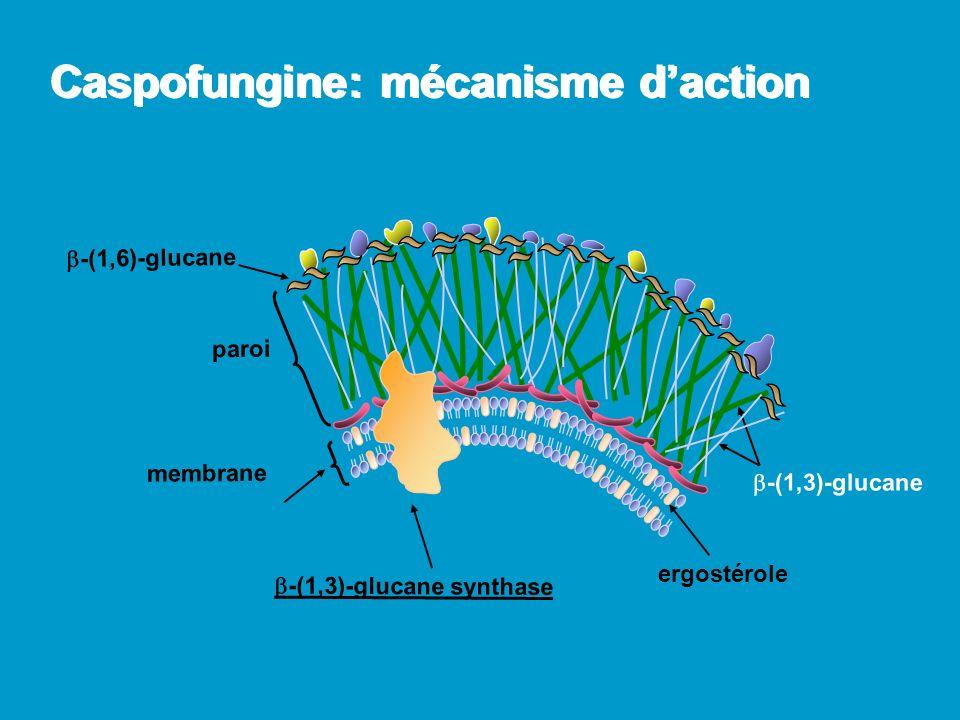 Caspofungine: spectre in vitro Candida: toutes espèces même résistantes au fluco; plutôt fongicide (réserve pour C.
