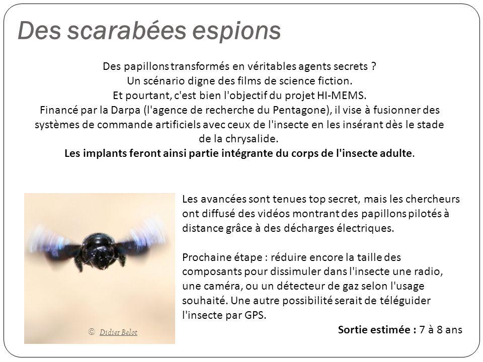 Des scarabées espions © Didier Belot Des papillons transformés en véritables agents secrets ? Un scénario digne des films de science fiction. Et pourt