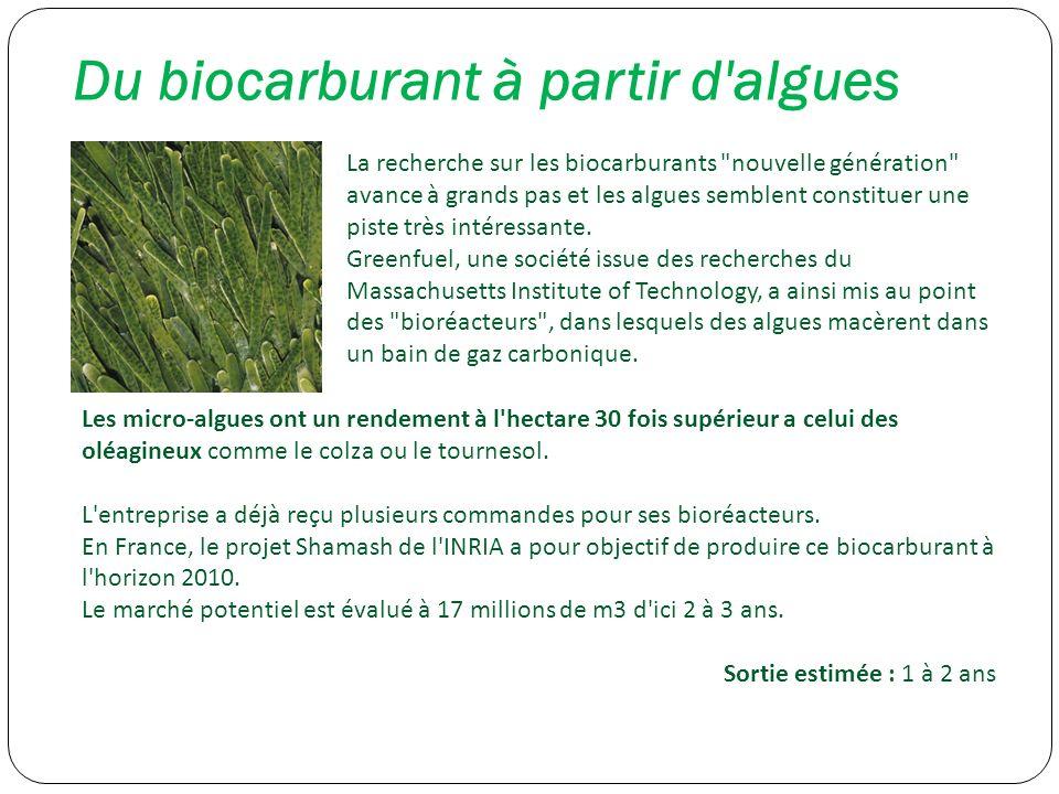 Du biocarburant à partir d'algues La recherche sur les biocarburants