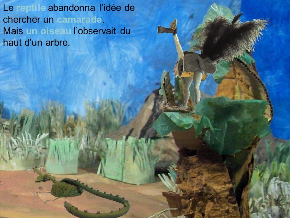 Le reptile abandonna lidée de chercher un camarade. Mais un oiseau lobservait du haut dun arbre.