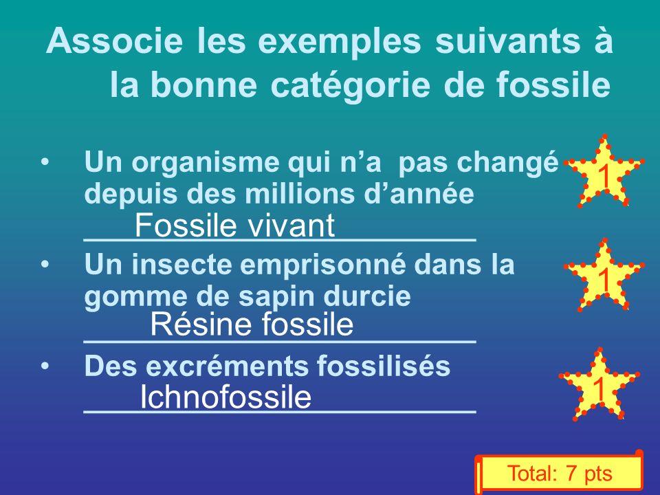 Associe les exemples suivants à la bonne catégorie de fossile Un organisme qui na pas changé depuis des millions dannée ________________________ Un insecte emprisonné dans la gomme de sapin durcie ________________________ Des excréments fossilisés ________________________ Fossile vivant Résine fossile Ichnofossile 1 Total: 7 pts 1 1