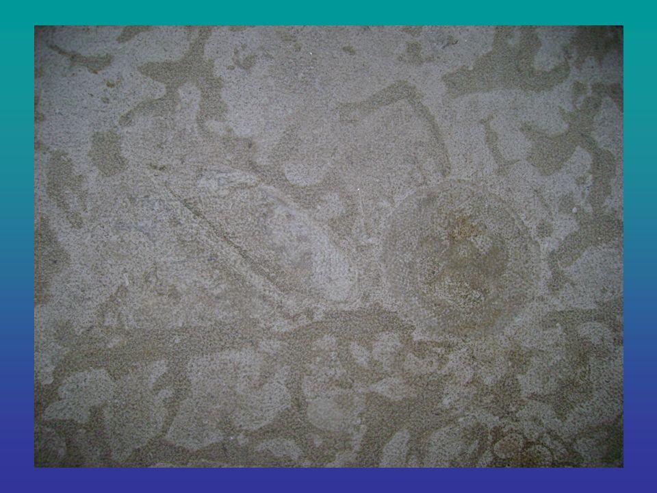 Exemple dorganisme conservé Carcasse dun bébé mammouth âgé denviron 6 mois conservée par le gel datant denviron 40 000 à 100 000 ans.