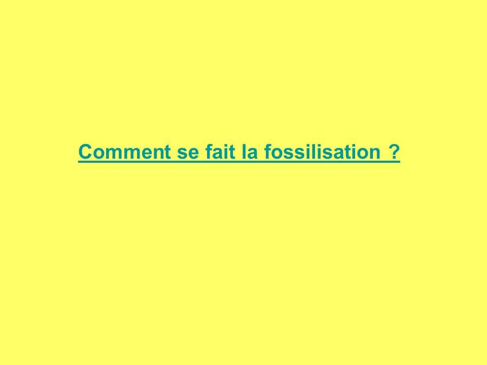 Comment se fait la fossilisation ?