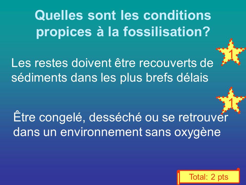Quelles sont les conditions propices à la fossilisation.