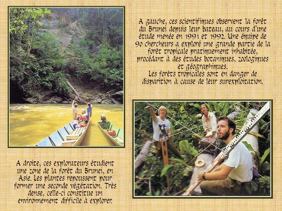 A droite, ces explorateurs étudient une zone de la forêt du Brunei, en Asie.