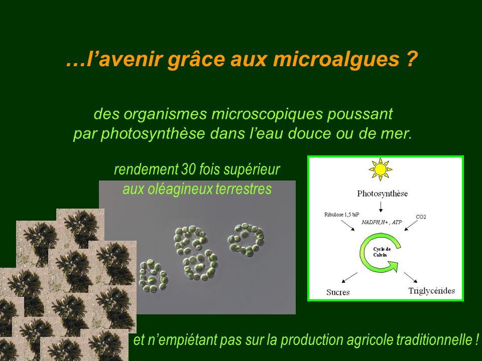 des organismes microscopiques poussant par photosynthèse dans leau douce ou de mer. et nempiétant pas sur la production agricole traditionnelle ! rend