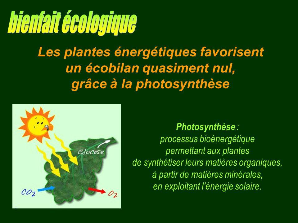 Photosynthèse : processus bioénergétique permettant aux plantes de synthétiser leurs matières organiques, à partir de matières minérales, en exploitan