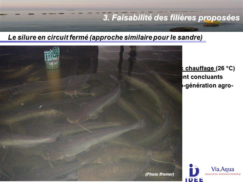 3. Faisabilité des filières proposées Le silure en circuit fermé (approche similaire pour le sandre) STRUCTURE SIMILAIRE + CHAUFFAGE bassins à très gr