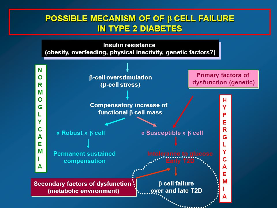 Permanent sustained compensation Intolerance to glucose Early T2D cell failure over and late T2D POSSIBLE MECANISM OF OF CELL FAILURE IN TYPE 2 DIABETES Insulin resistance (obesity, overfeading, physical inactivity, genetic factors?) Insulin resistance (obesity, overfeading, physical inactivity, genetic factors?) -cell overstimulation -cell stress Compensatory increase of functional cell mass « Robust » cell « Susceptible » cell Primary factors of dysfunction (genetic) Primary factors of dysfunction (genetic) HYPERGLYCAEMIAHYPERGLYCAEMIA Secondary factors of dysfunction (metabolic environment) Secondary factors of dysfunction (metabolic environment) NORMOGLYCAEMIANORMOGLYCAEMIA