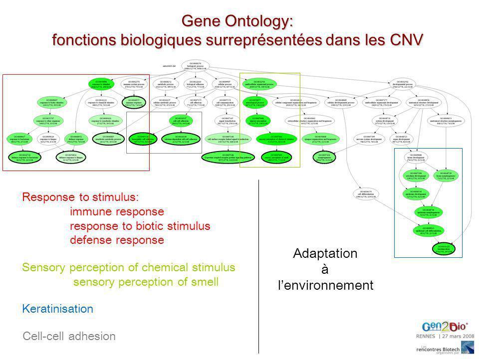 Gene Ontology: fonctions biologiques surreprésentées dans les CNV Response to stimulus: immune response response to biotic stimulus defense response S