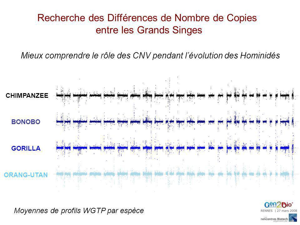 CHIMPANZEE BONOBO GORILLA ORANG-UTAN Moyennes de profils WGTP par espèce Mieux comprendre le rôle des CNV pendant lévolution des Hominidés Recherche d