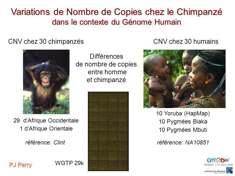 CNV chez 30 chimpanzés Différences de nombre de copies entre homme et chimpanzé CNV chez 30 humains 29 dAfrique Occidentale 1 dAfrique Orientale 10 Yo