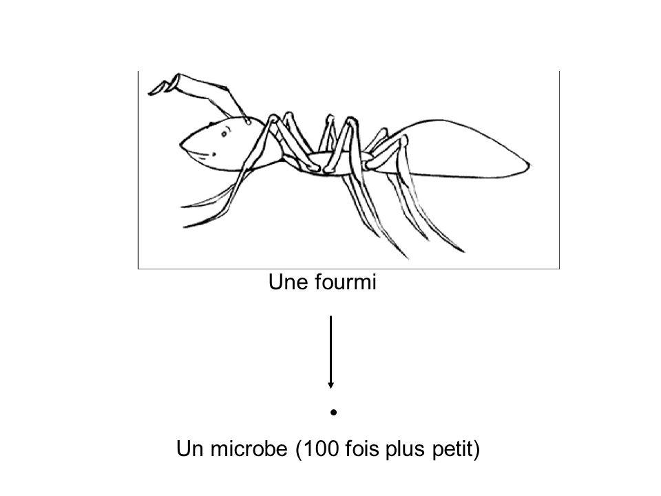 Une fourmi Un microbe (100 fois plus petit)
