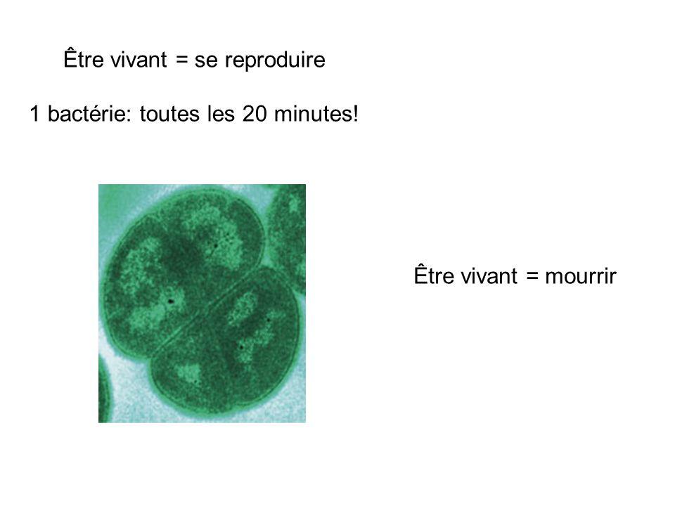 Être vivant = se reproduire 1 bactérie: toutes les 20 minutes! Être vivant = mourrir