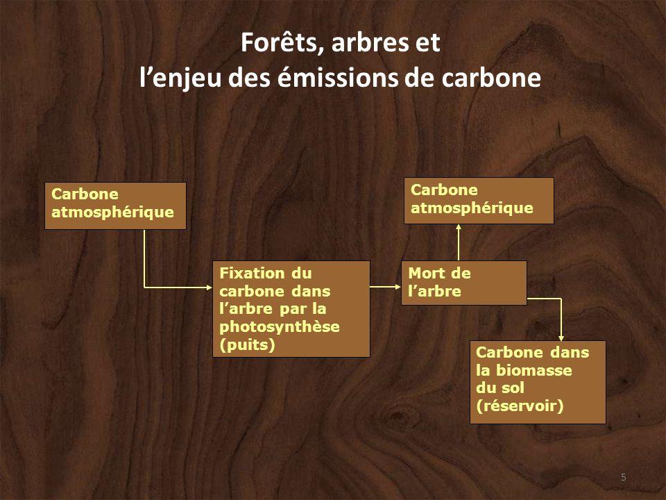 5 Forêts, arbres et lenjeu des émissions de carbone Mort de larbre Fixation du carbone dans larbre par la photosynthèse (puits) Carbone atmosphérique Carbone dans la biomasse du sol (réservoir) Carbone atmosphérique