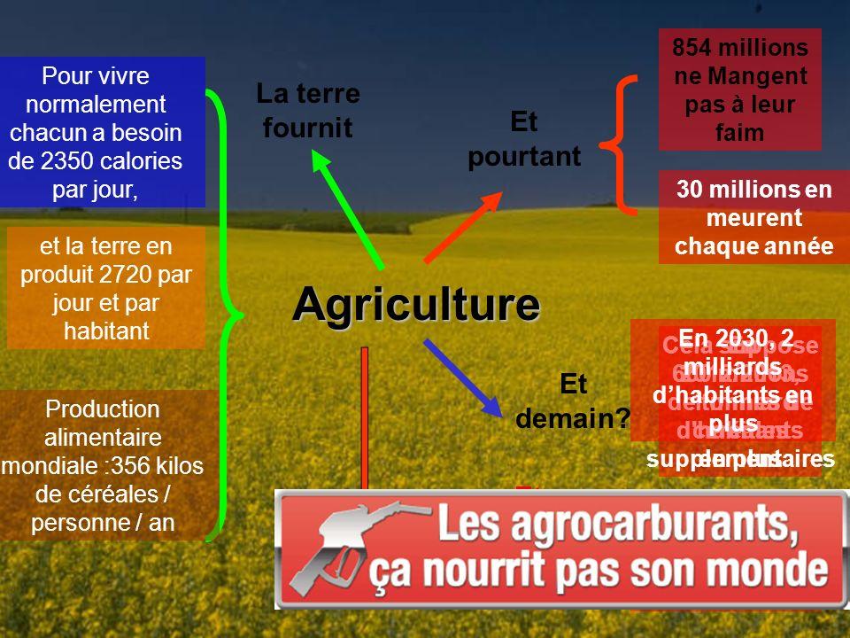 Agriculture La terre fournit Et pourtant Pour vivre normalement chacun a besoin de 2350 calories par jour, et la terre en produit 2720 par jour et par