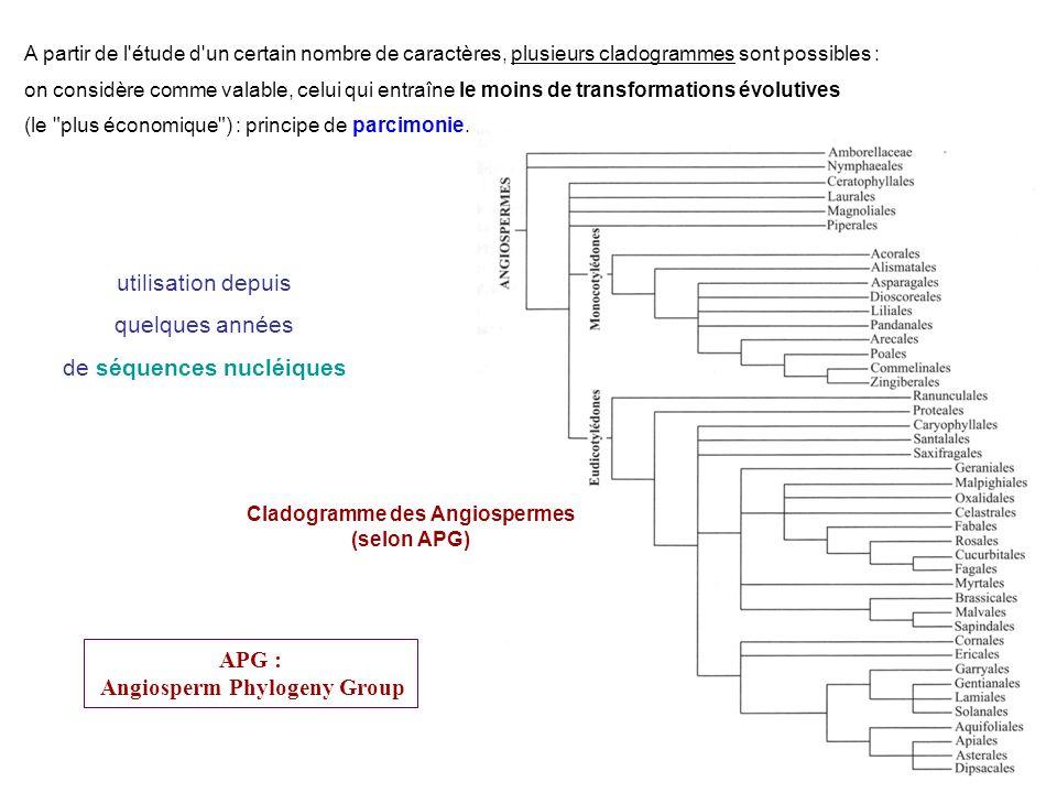 utilisation depuis quelques années de séquences nucléiques A partir de l'étude d'un certain nombre de caractères, plusieurs cladogrammes sont possible